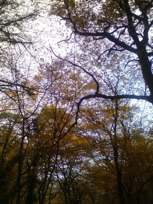 http://ephemeride.cowblog.fr/images/foretenautomne4.jpg