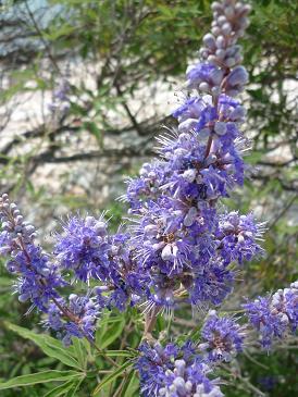 http://ephemeride.cowblog.fr/images/planteptchanvre2.jpg